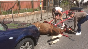 Horse abandoned after being hit by car