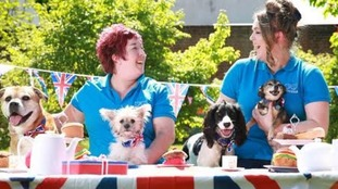 Battersea dogs are guests at Windsor street party