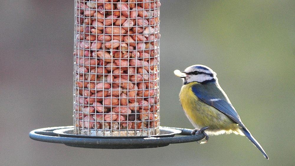 Кормушка для диких птиц