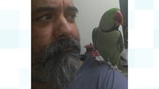 Workington man appeals for help to find his missing parrot