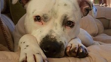 Couple fear lost dog may have been stolen and offer big reward