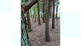 Warning of barbed wire strung up in Wiltshire woods