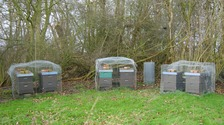Thousands of bees stolen in Essex