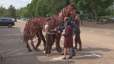 Fred and Sangeeta meet Joey from War Horse