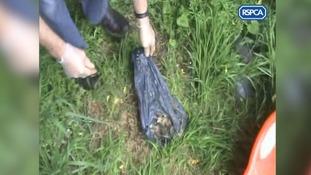 Dead puppies found in black sacks in the garden