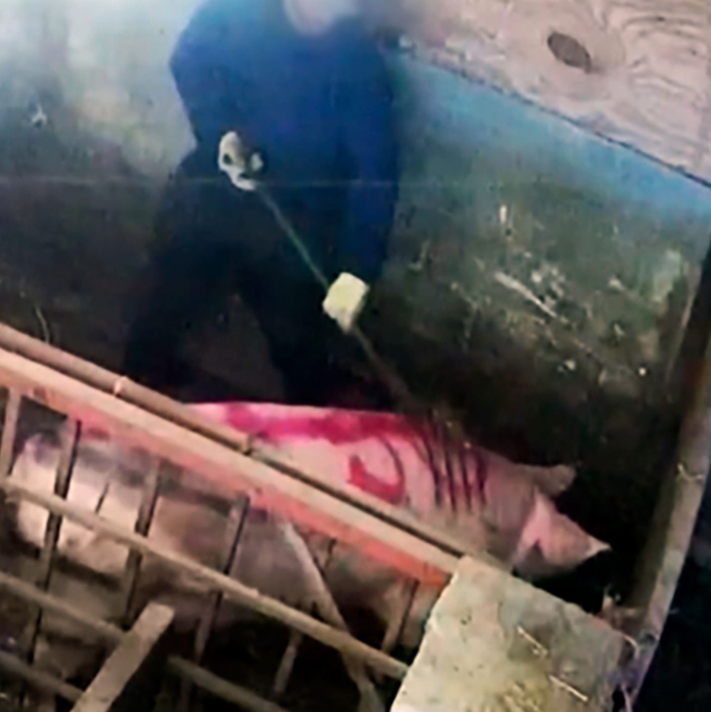 Undercover Footage Reveals Violent Animal Abuse On Farm