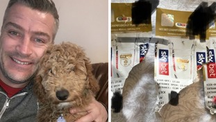 Andrew Talbot and cockapoo George (left) and the chewed up Wembley tickets (right).