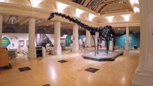Dippy the dinosaur comes to Birmingham