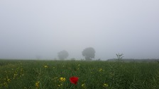 A misty scene at Hinxton in Cambridgeshire