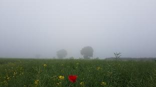 A misty scene at Hinxton in Cambridgeshire