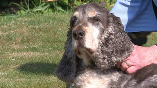 Toby had a lucky escape after being taken to Dick White's vets.