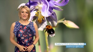 VIDEO: Monday's Pollen Count for the North East