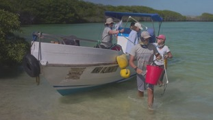ITV News joined researchers gaining supervised access to parts of the islands never seen to tourists.