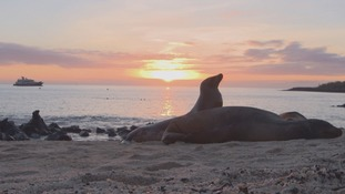 The impact of man on the Galápagos islands is threatening the near-pristine island.