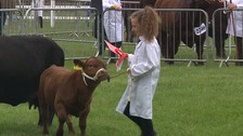 The show includes a series of livestock competitions.