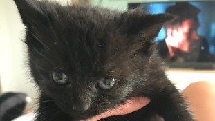 Kittens rescued from sewer pipe after being thrown from car