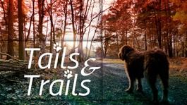 Tails and Trails - Dog walks in East Anglia