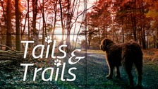 Fantastic walks in the East of England with your dog