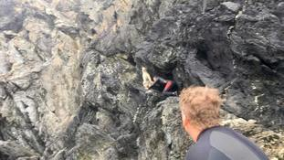 Stranded sheep rescued by wildlife tour group after four-day cliff ordeal