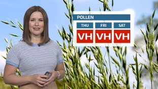 Latest pollen forecast for ITV Meridian region
