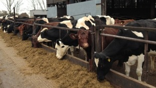 Dairy farmers 'still not being paid enough'