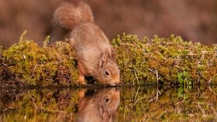 Fifth of British mammals face extinction, study warns
