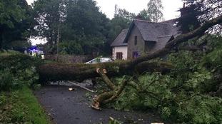 Tree blown over near Haugh of Urr