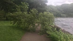 A fallen tree at Talkin Tarn County Park
