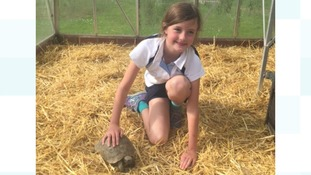 Lost poster drawn by 9 year old helped RSPCA officer track down tortoise