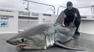 'Biggest shark ever' caught by angler off the coast of Pembrokeshire