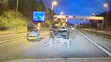 Men 'rode horse and trap on motorway'