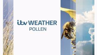 Latest pollen forecast