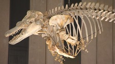 The University of Cambridge Zoology museum has re-opened after five years of renovation work.