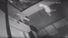 Police believe new dissident group behind Poleglass murder