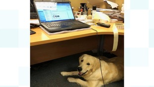 Harvey at work