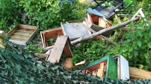 More than 100,000 bees killed after vandals destroy hives