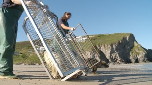 Last of seal pups from winter rescue released back to wild