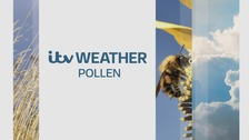 ITV Weather Pollen count