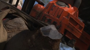Cutting the rhino horn