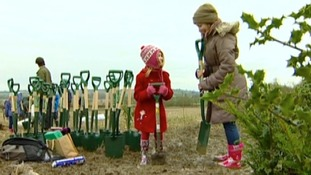 Diamond Wood being planted in Rugby to commemorate  the Queen's jubilee