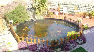 Alan and Linda Brown's pond before the otter struck