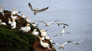 Full scale of pollution spill affecting birds not yet known