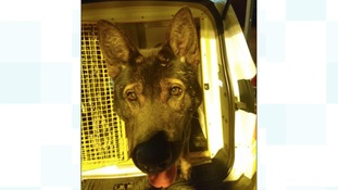 A law to give police dogs like Axle great protection from attacks came a step closer to becoming law today.