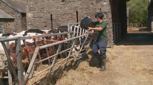 Abi Reader on the farm