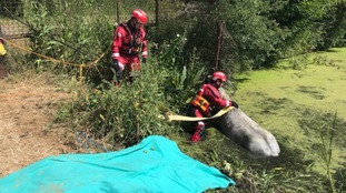 Horse rescued after getting stuck in watery ditch
