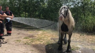 The horse was hosed down after waiting to be rescued in the heat