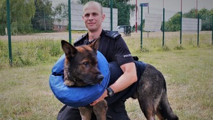 Police dog stabbed in the line of duty reunited with handler