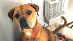 Dumped in a drug den but now searching for a new home