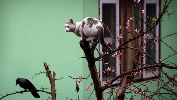 A cat and a bird share a lookout post atop a blossom tree