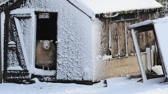 Ewe feeling the cold?